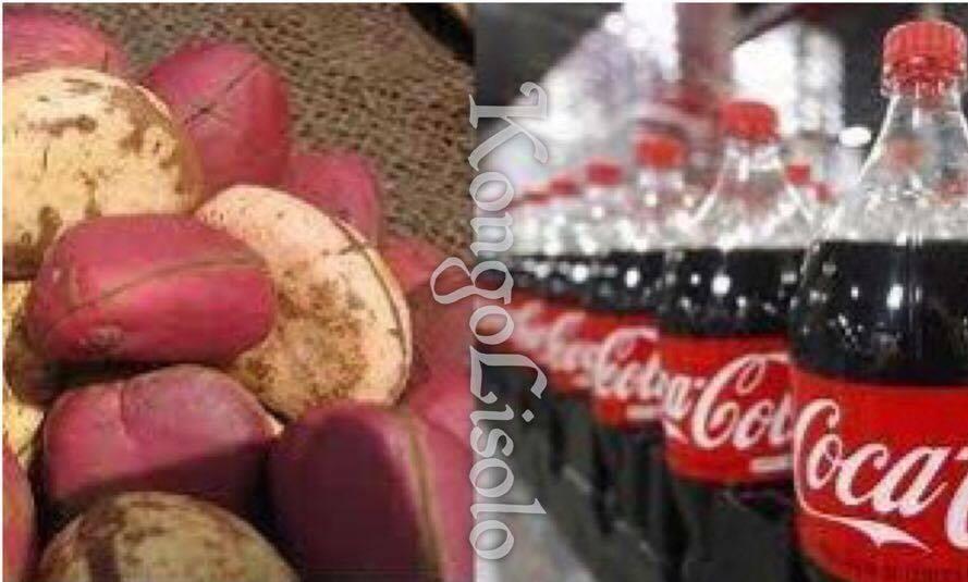 La noix de Kola ou Cola est le fruit de différents arbres du genre COLA
