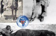 William Pickett « Bill » Pickett : précurseur du rodéo « William (Will; le projet de loi) Pickett était un cow-boy légendaire de Taylor, Texas de descendance Noire et indienne; il est né le 5 décembre 1870, à la communauté Jenks-Branche sur la ligne du comté de Travis; il est décédé le 2 avril 1932, près de Ponca City, Oklahoma »
