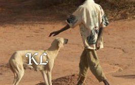 BURKINA FASO: Génocide contre les chiens errants dans la ville de Ouagadougou  ... (VIDÉO)