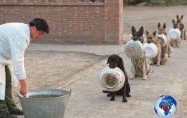 Les chiens répondent au nom des présidents africains : certains présidents africains sont des chiens des occidentaux, ils respectent et craignent leurs maîtres (occidentaux) plus que le Dieu d'Israël et se laissent mater ... (VIDÉO)