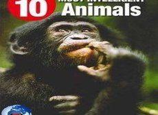 Voici les 10 animaux les plus intelligents du monde : de nombreux facteurs entrent en jeu lorsqu'il s'agit d'évaluer et de classer l'intelligence des animaux ... (VIDÉO)
