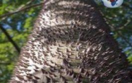 Même la nature a dû apprendre à se défendre : « Le Ceiba pentandra, ou Fromager, Kapokier ou Arbre à Kapok bois coton », est une espèce d'arbres de la famille des Bombacaceae selon la classification classique, ou de celle des Malvaceae selon la classification phylogénétique
