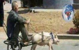 Fête du Ramadan : Même les moutons ont finalement compris que cette religion est une grosse arnaque et ils se révoltent ... (VIDÉO)