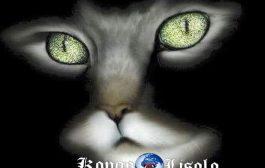 Pourquoi pensons-nous que les chats ont neuf vies? ... Il y a deux légendes qui suggèrent que les chats ont neuf vies :