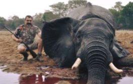 Halte au tourisme de chasse : le tourisme de chasse est une vogue dans certaines régions ou certains pays du monde, les pays d'Afrique ne font pas exception