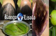Les feuilles de goyave peuvent arrêter à 100 % votre perte de cheveux et les faire pousser comme jamais : les hommes et les femmes sont tous deux affectés par la perte de cheveux et rien ne peut résoudre le problème, peu importe ce que vous utilisez
