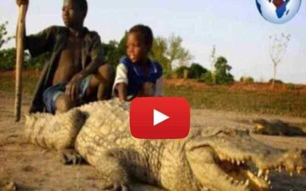 Dans ce village du Burkina Faso, les hommes et les crocodiles vivent en harmonie, rien d'étonnant quand on connaît l'histoire de l'Afrique ancienne ... (VIDÉO)