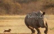 L'ABC pour gagner un combat pour les Noirs/Africains : gagner un combat n'est pas l'apanage du plus fort; souvent, ce ne sont pas les plus forts qui gagnent un combat, mais ceux qui n'abandonnent pas, ceux qui sont intelligents et déterminés, ceux qui mènent « Le combat de l'intelligence, le combat de l'alouette et de l'éléphant, le combat entre le Lion et le Moustique »